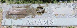 Lola M Adams