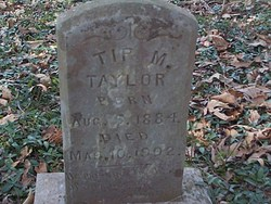 Tip M Taylor